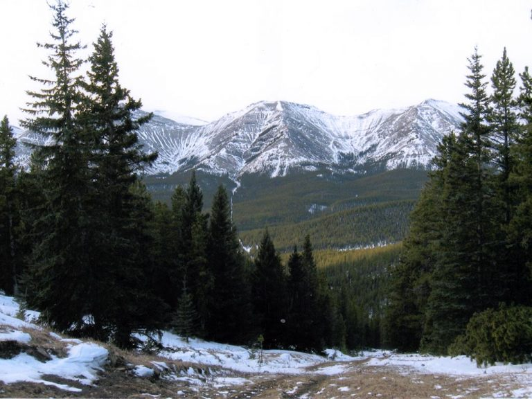 Timberline-Guiding-Alberta-Canada-Hunting8