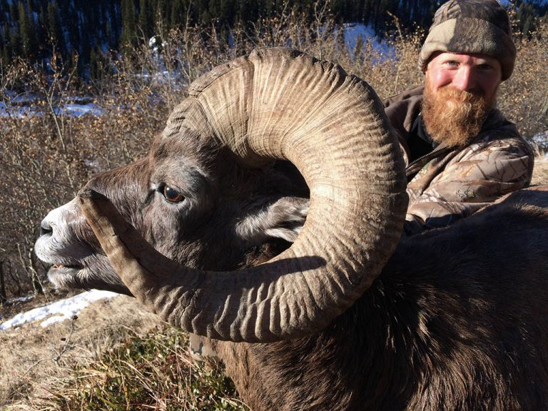 bighorn sheep hunting canada