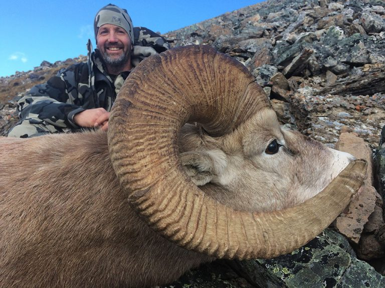 Timberline-Guiding-Bighorn-Sheep-Hunting13