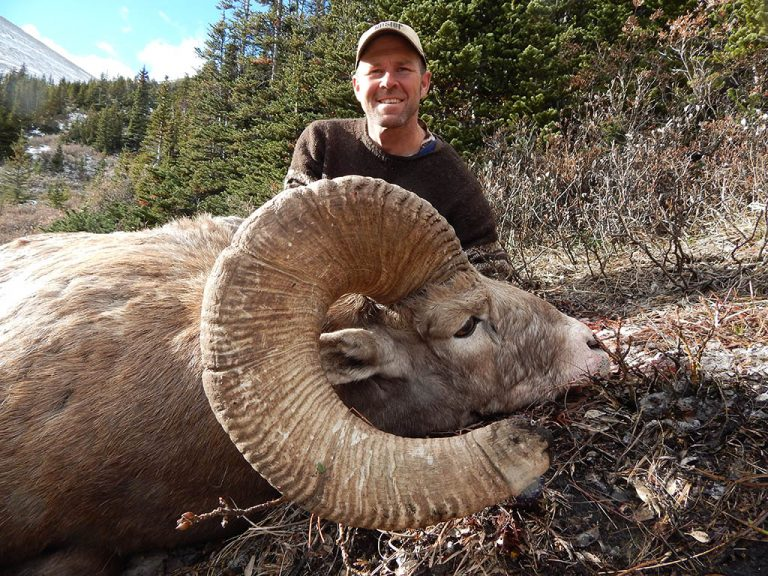 Timberline-Guiding-Bighorn-Sheep-Hunting19