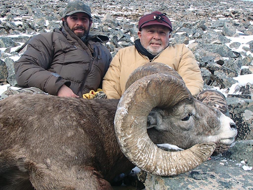 Bighorn Sheep Hunting Alberta Canada