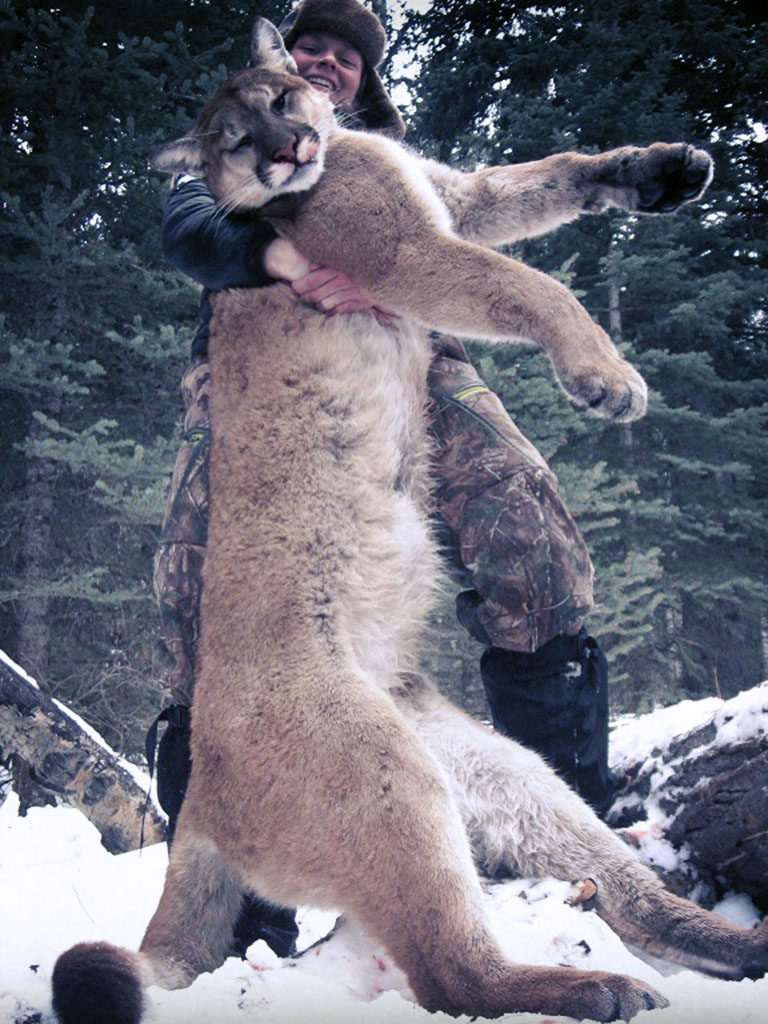 Timberline-Guiding-Cougar-Hunting11