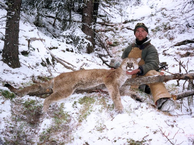 Timberline-Guiding-Cougar-Hunting24