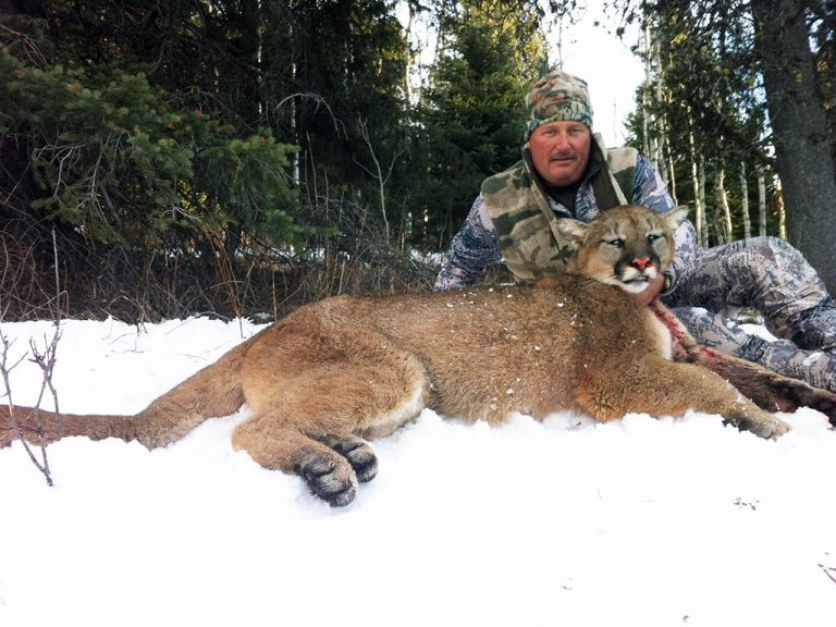 Timberline-Guiding-Cougar-Hunting9