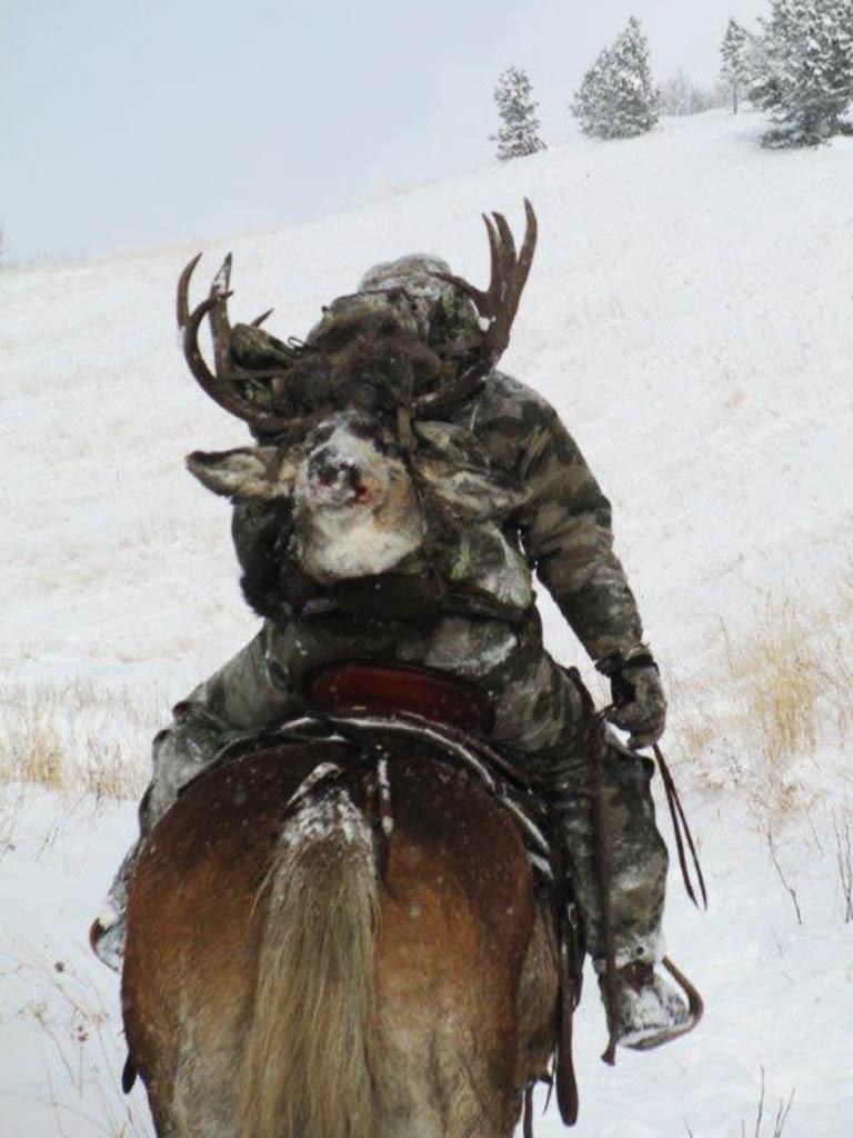 TimberlineGuiding-MuleDeer-Hunting5