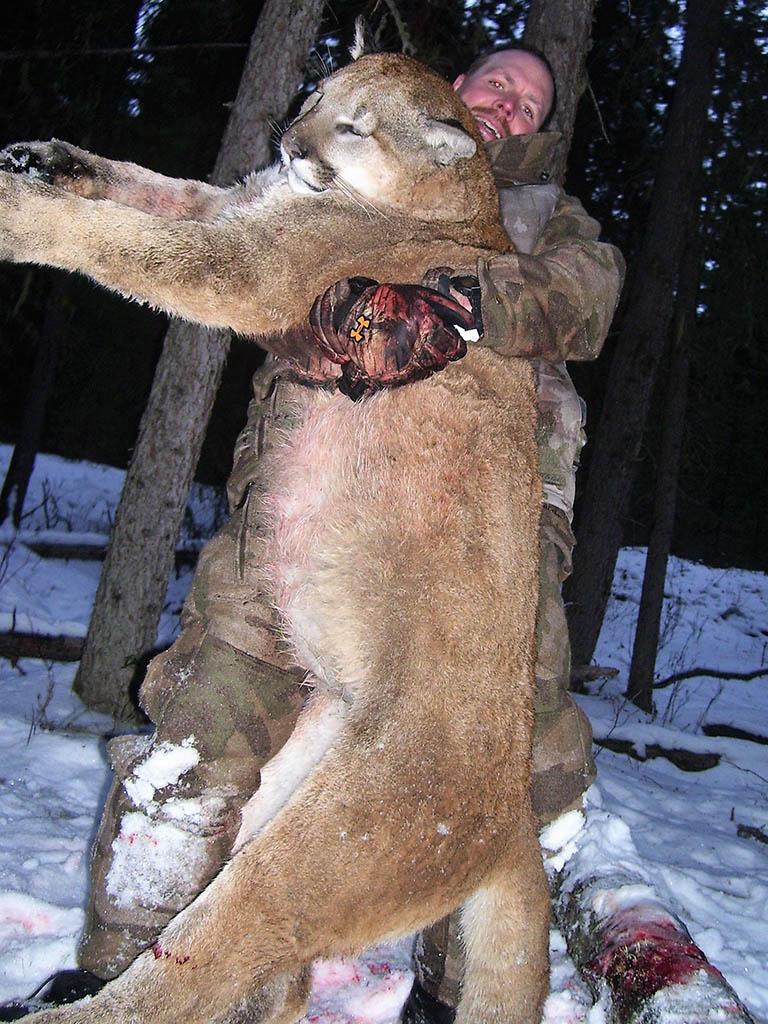 Cougar Hunting Alberta Canada