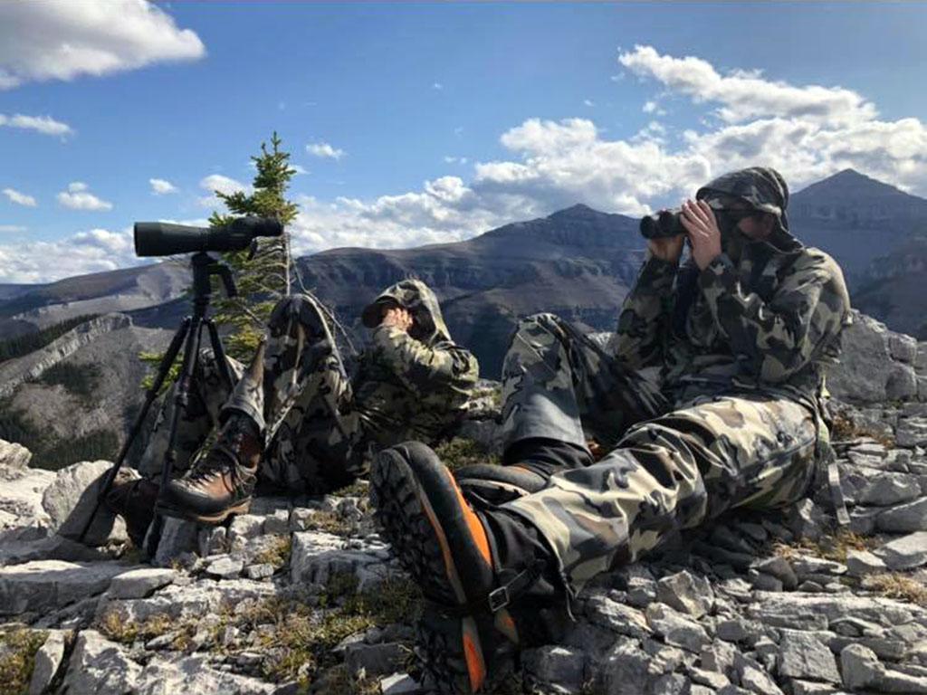 bighorn sheep hunts timberline guiding