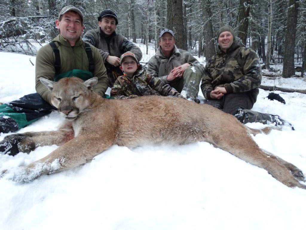 Cougar Hunting Outfitters Alberta Canada